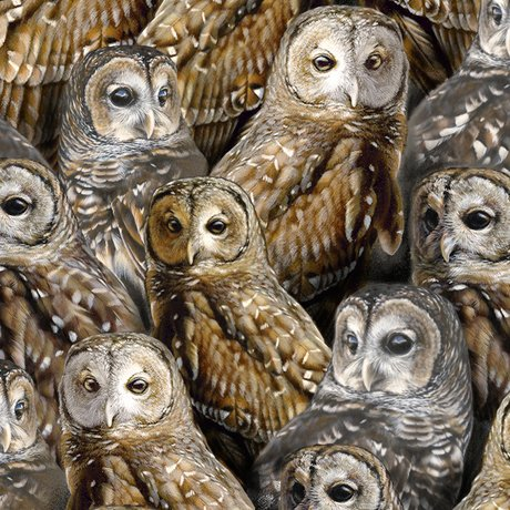 Packed Barred Owls