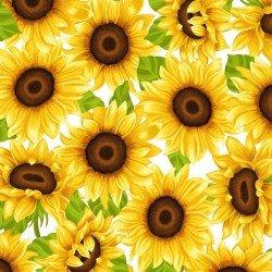 Sunny Sunflowers,Sunflowers