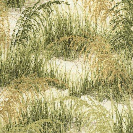 Beach Grass C5354-Grass