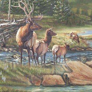Bear Meadow - Scenic