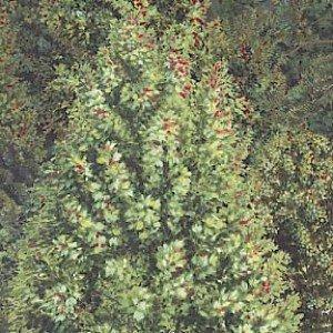 Bear Meadow - Trees