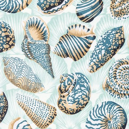 Natural World - Sea Shells - Tropic