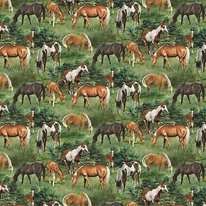 Springs Creative Wild Wings Valley Crest Horse Scenic