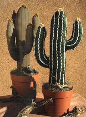 Giant Saguaro Cactus Pattern