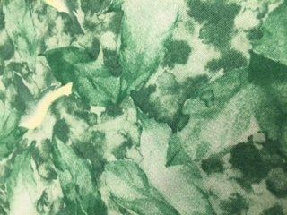 Canopy Leaf Tour Paintbrush St