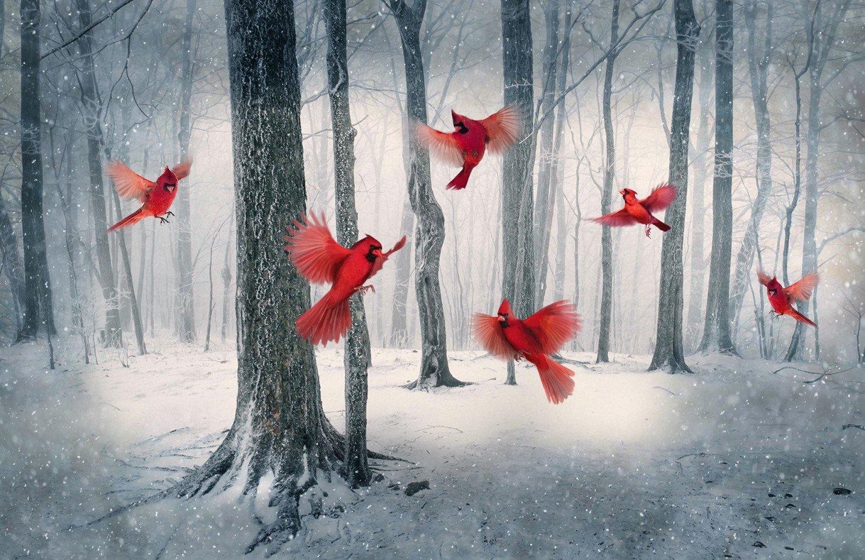 Call of the Wild ~ Cardinal