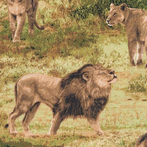 Born Free 112-31911 Lions