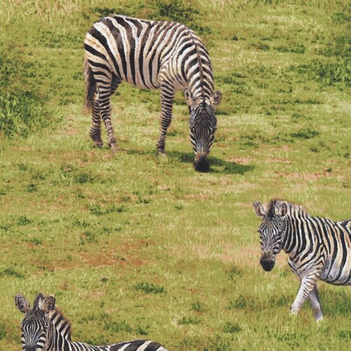 Born Free 112-31931 Zebra