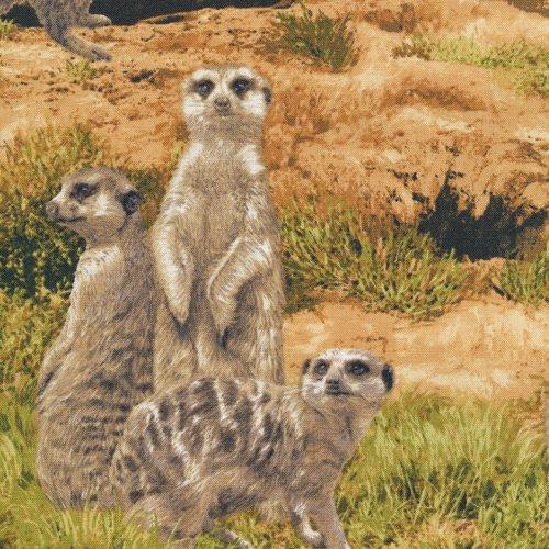Born Free Meerkat