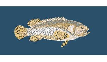 Brindled Grouper tapestry kit by Elizabeth Bradley