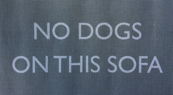 No Dogs On This Sofa Needlepoint (Grey)