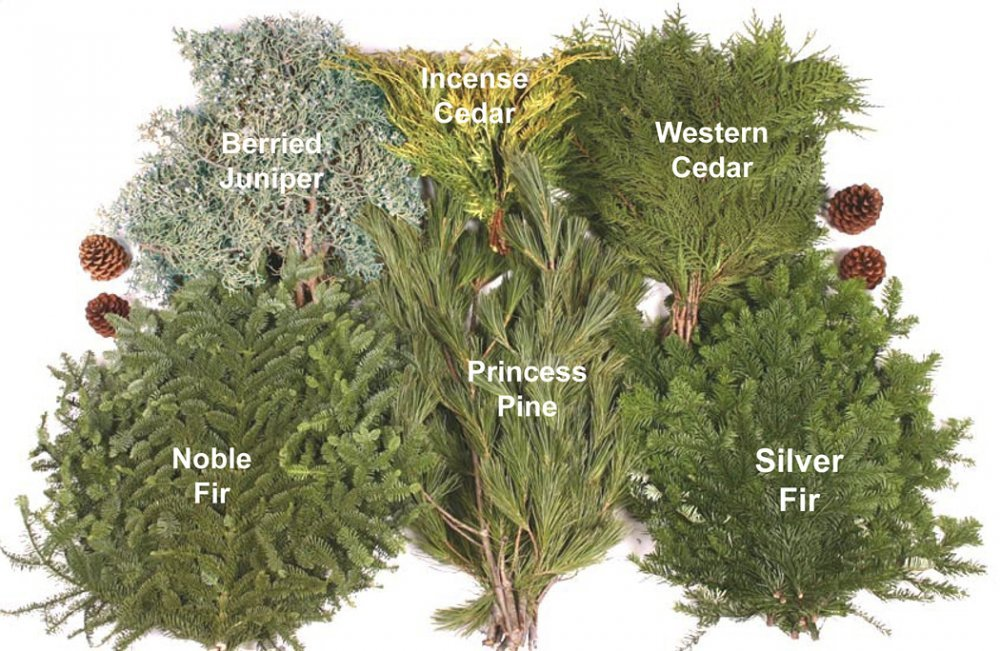 Assorted Evergreens, 10 lbs.