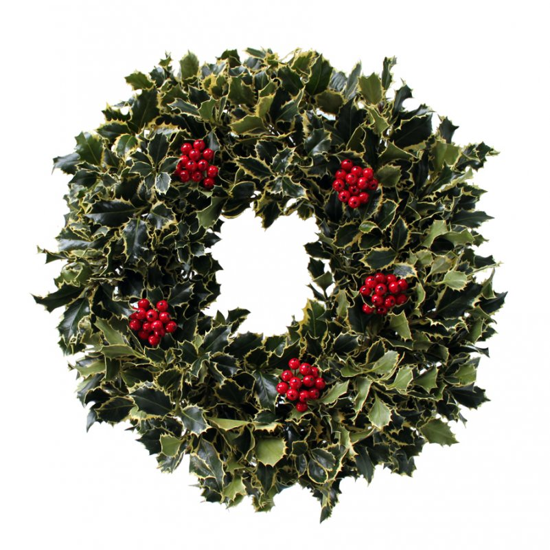 20 Variegated Holly Wreath