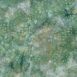 Cactus Texture Meadow MR17-170