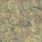 Cactus Texture Desert MR17-193