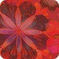 Venice AQSD-19722-3 Red
