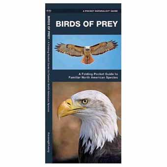 Birds of Prey - James Kavanagh