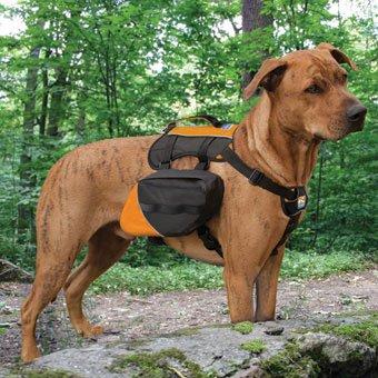 Kurgo Baxter Pack