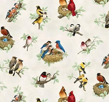 Beautiful Birds - Birds on Branches