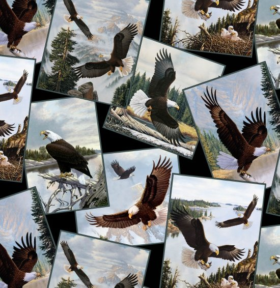 Majestic Bald Eagle - Eagle Photos