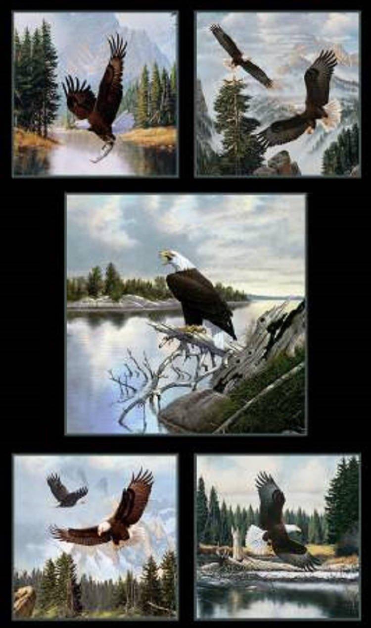 Majestic Bald Eagle - Panel