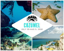 Cozumel Reef and Cenote Tour 2018