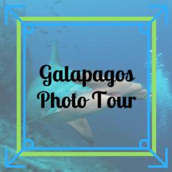 Galapagos Photo Tour