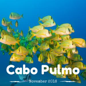 Cabo Pulmo 2016