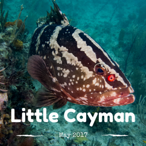Little Cayman 2017