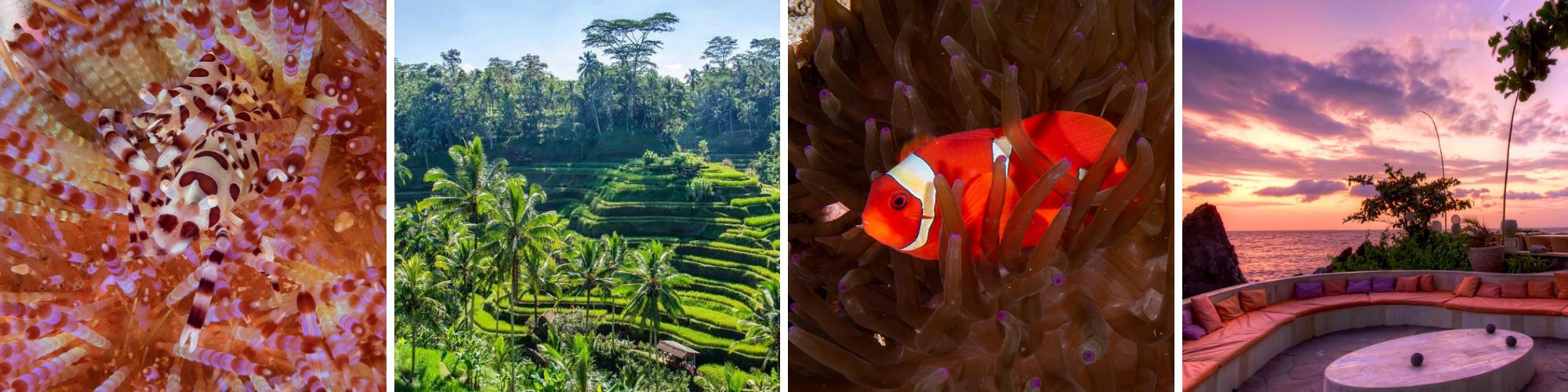 Bali Underwater