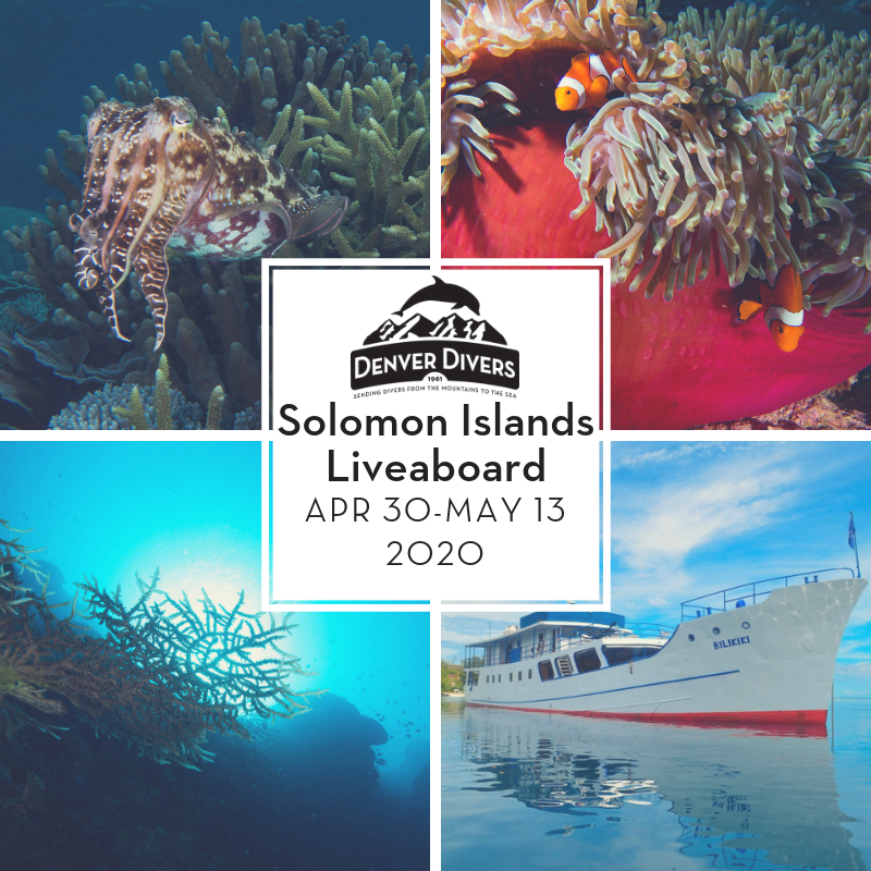 Solomon Islands Liveaboard 2020