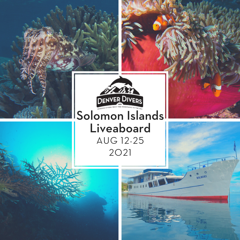 Solomon Islands Liveaboard 2021