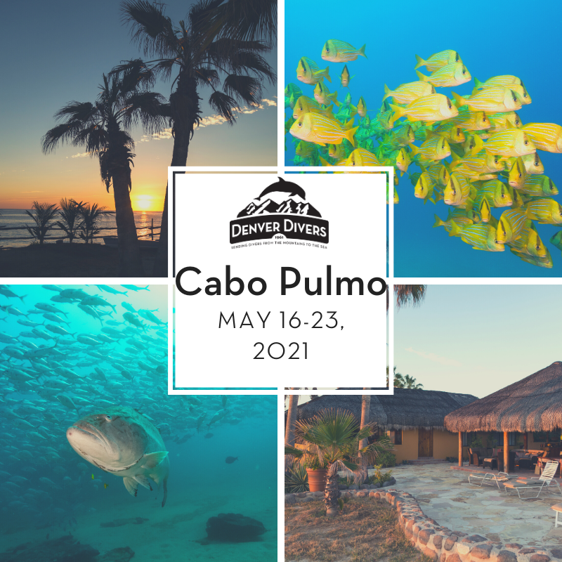 Cabo Pulmo Eco-Adventure May 2021