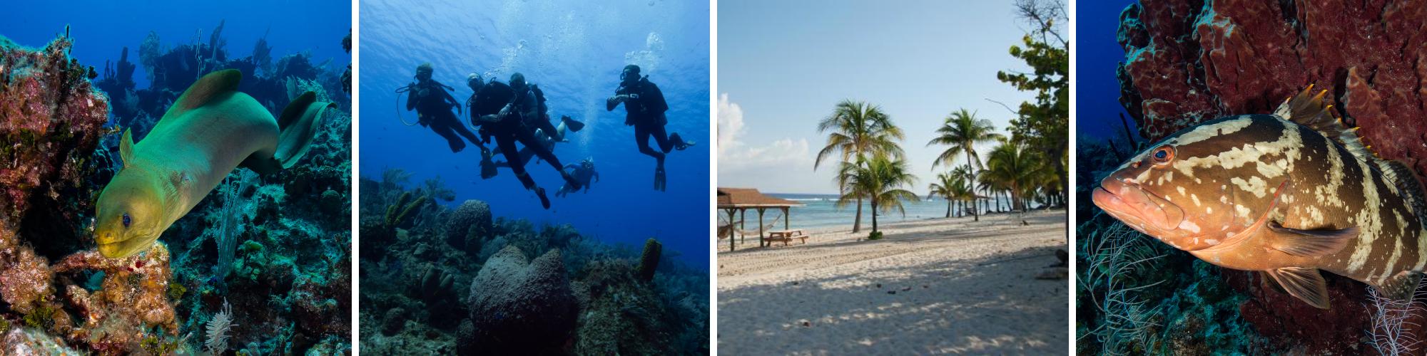 Cayman Brac Underwater