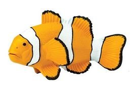 SAFARI Clown Anenomefish
