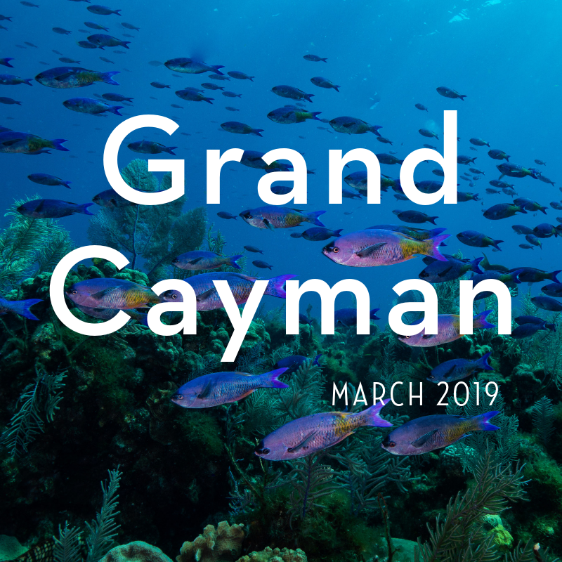 Grand Cayman 2019