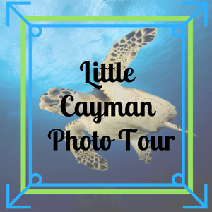 Little Cayman Photo Tour