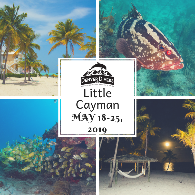 Little Cayman 2019