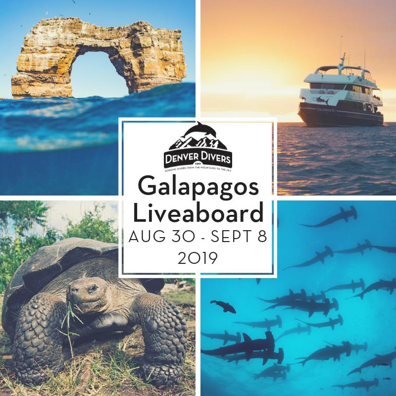 Galapagos Liveaboard 2019