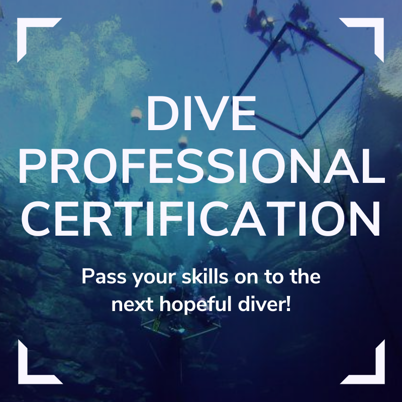 Professional Certification Link