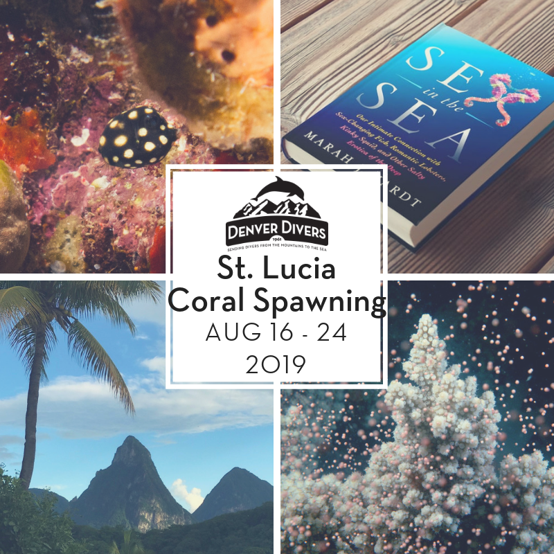 St Lucia Coral Spawning 2019