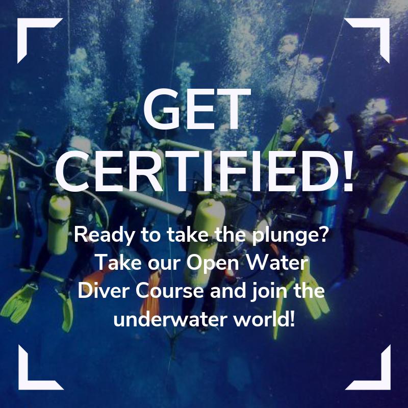 Open Water Diver Link