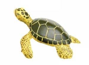SAFARI Safariology Life Cycle of a Green Sea Turtle