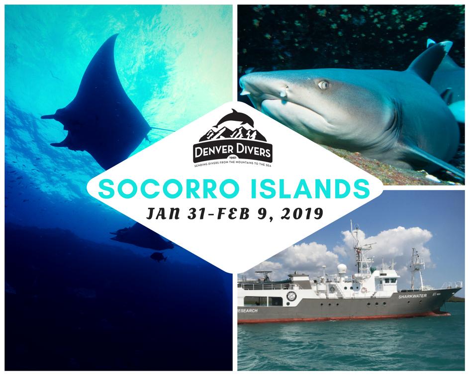 Revillagigedo Islands Liveaboard 2019