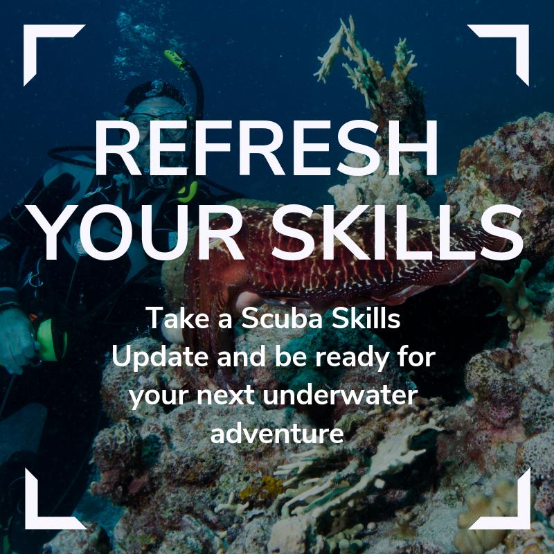 Scuba Skills Update Link