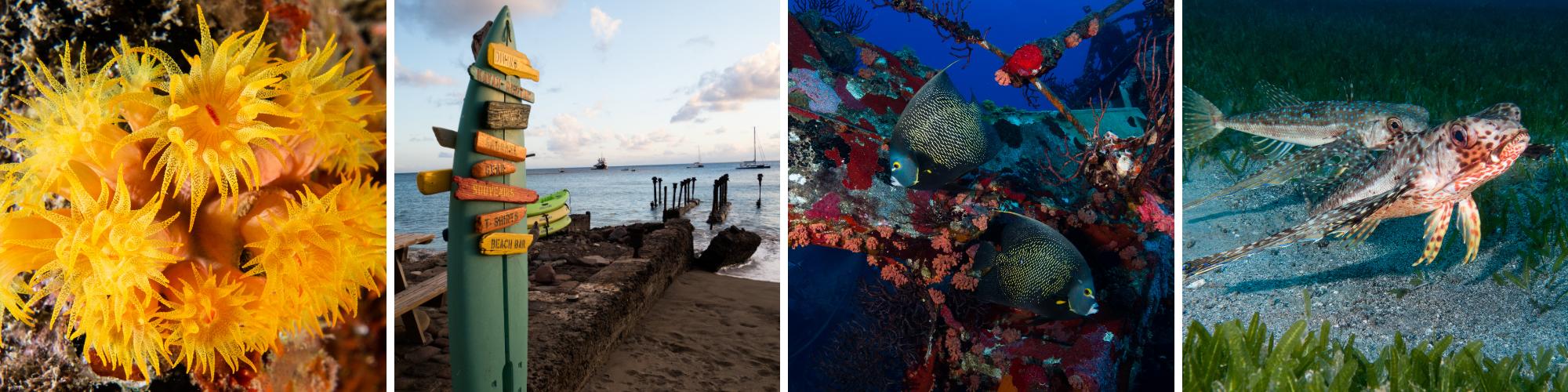 St Eustatius Underwater