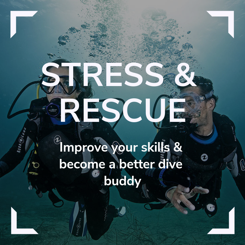 Stress and Rescue Link