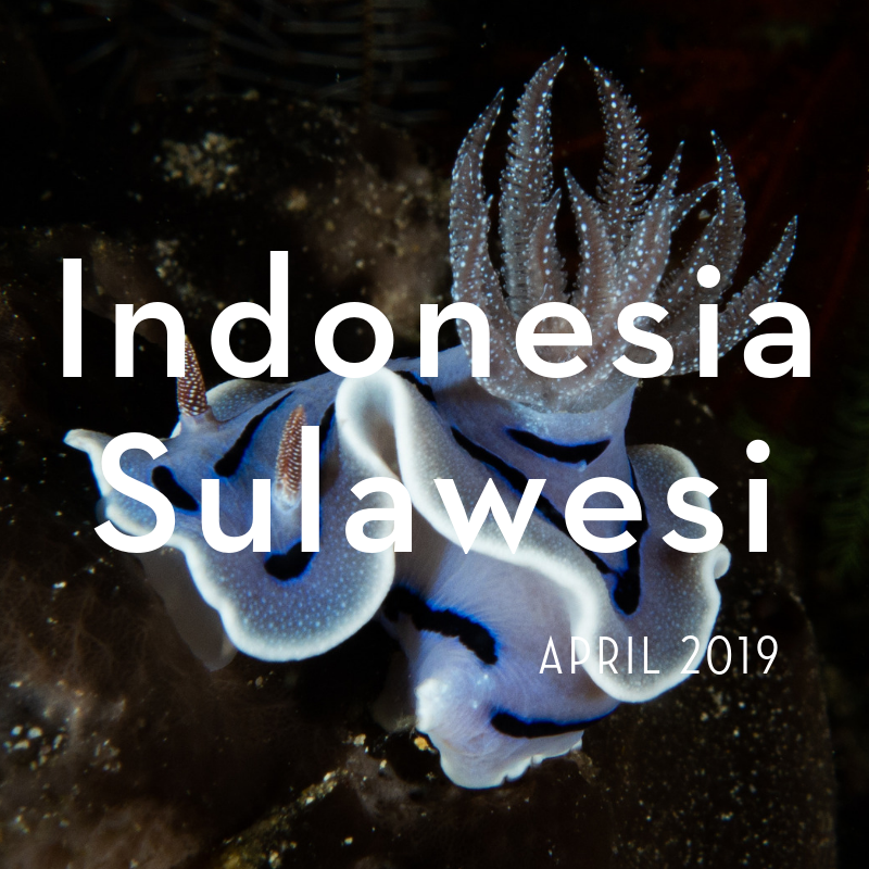 Indonesia Sulawesi 2019