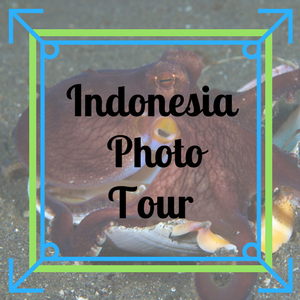 Sulawesi Indonesia Photo Tour