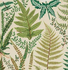 Botanical Ferns Natural